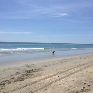Tiger Shores Beach