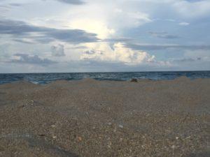 Fletcher Beach