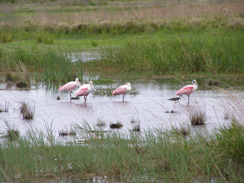 Allapattah Flats Wildlife Management Area Image