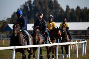 Payson Park Thoroughbred Training Center - Happy Horses Win