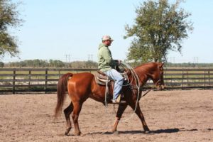 4L Land and Cattle- Team Roping
