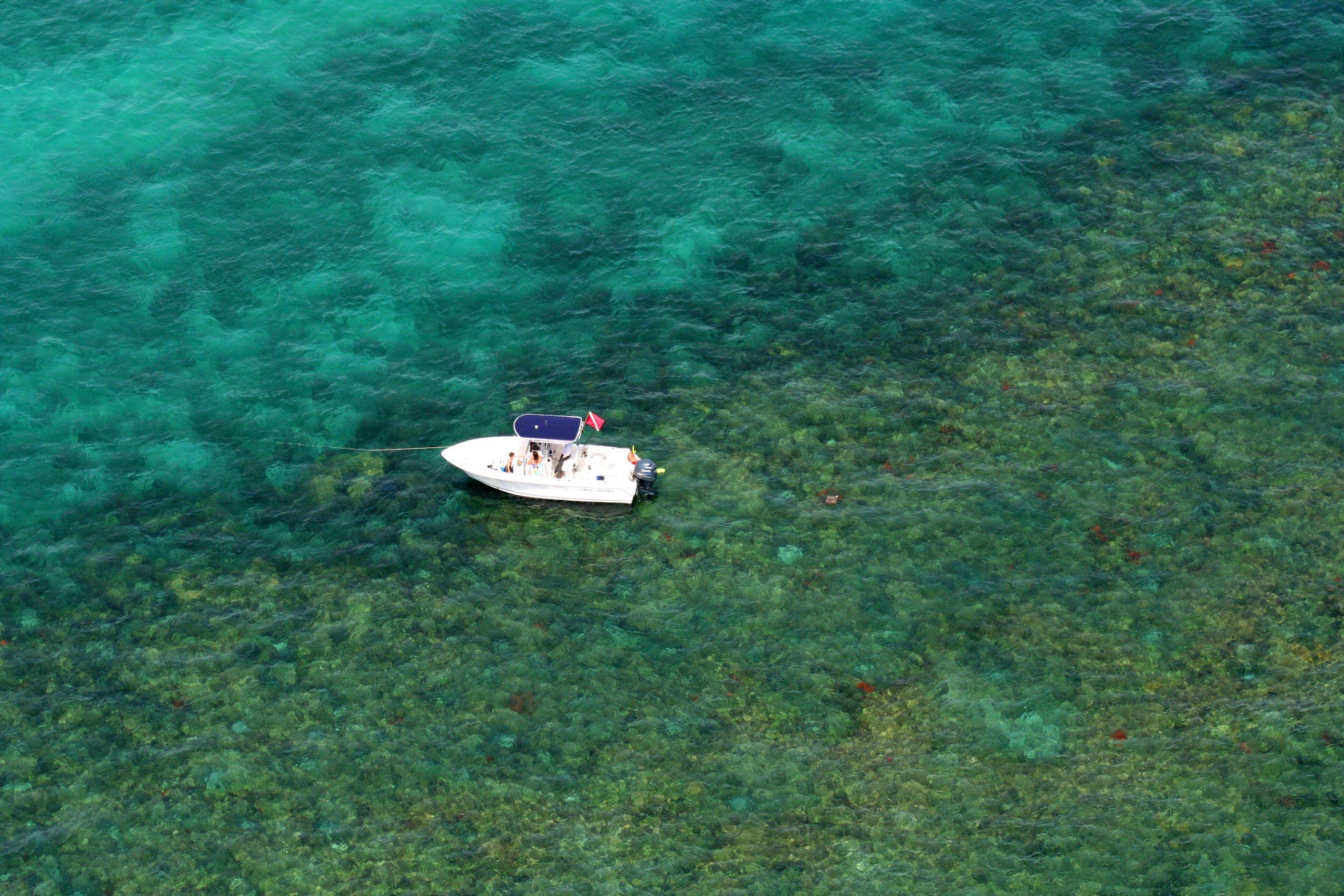 Surfing, Snorkeling, Diving Image