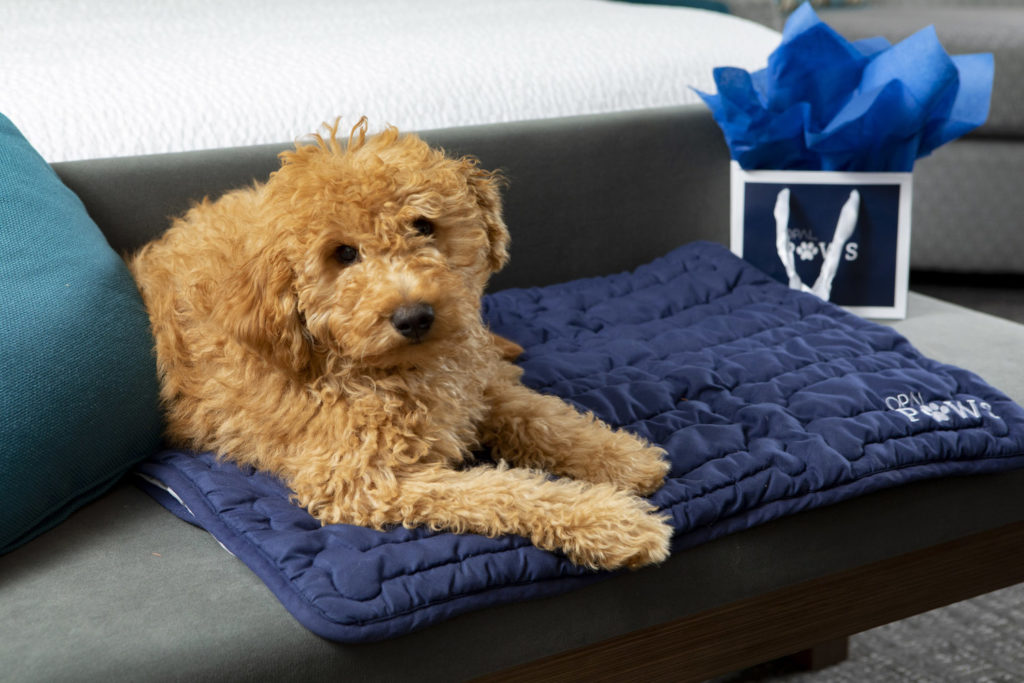 A small dog sits the at the foot on the bed of the Hutchinson Shores Resort and Spa, showcasing the hotel's Opal Paws program.